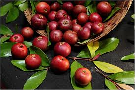 kokum fruit